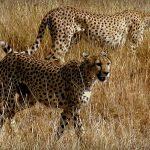 Sensaciones del Safari por Tanzania