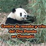 Centro de rescate y cría del Oso Panda