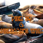 Pier 39 & Fisherman's Wharf